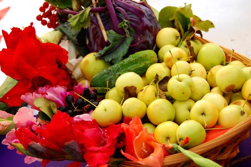 Основни хранителни вещества